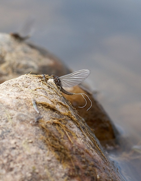 Fly-On-A-Rock