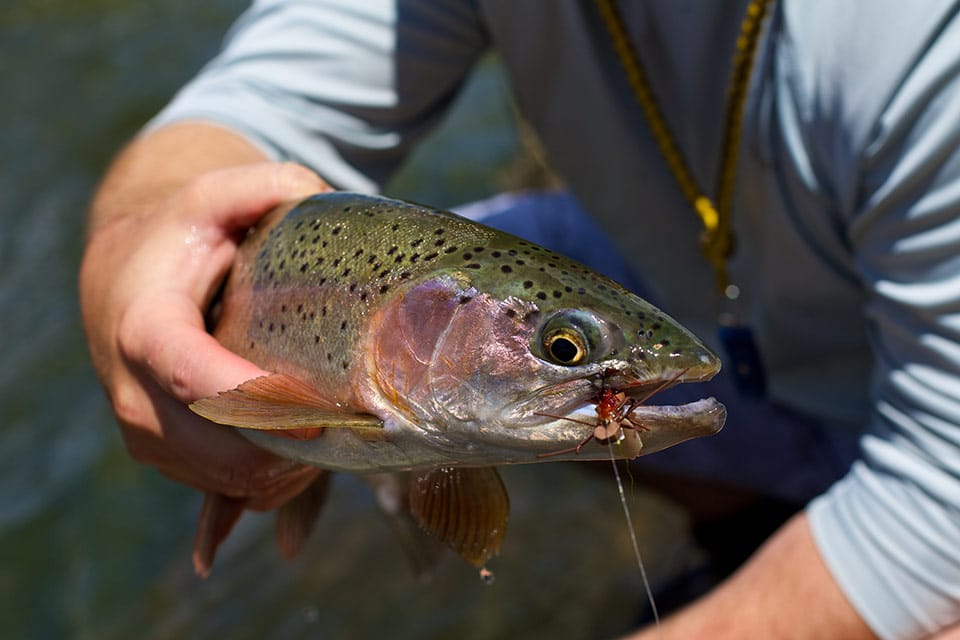 catch-trout-on-dry-flies-in-wyoming-with-the-reef-fly-shop-960px